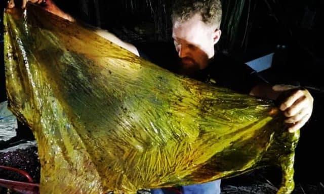 dead whale stomach plastic