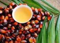 Environmental Impact of Cooking Oils (And Is Palm Oil Bad For the Environment)