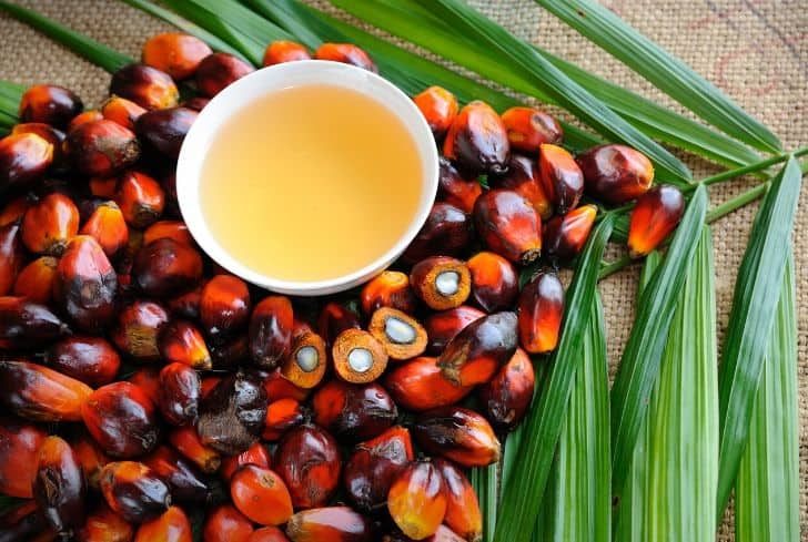 Palm-oil-bad-environment