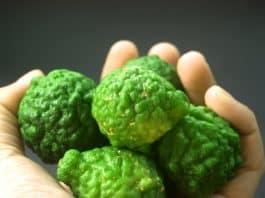 bergamot-fruit-leaf-isolated