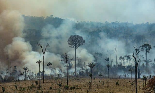 Fire-in-Amazon