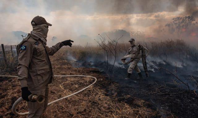 amazon-fires-biodiversity