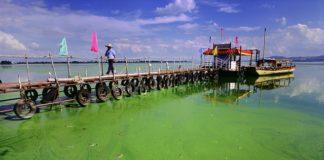 eutrophication-nitrogen-pollution