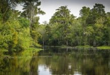 bayou-swamp-marsh-wetland