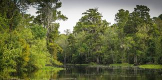 bayou-swamp-marsh-wetland