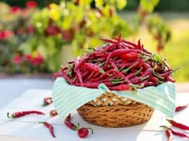 benefits-of-Chili-Pepper