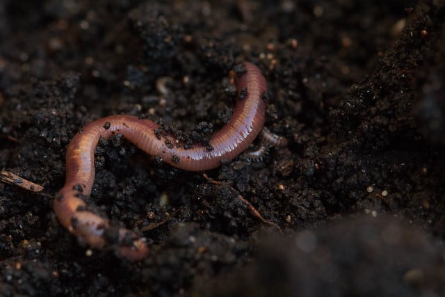 worms-in-soil