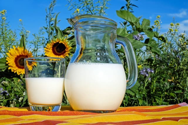 milk-glass-fresh-healthy-drink
