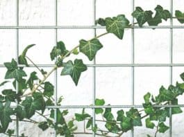 Green-walls