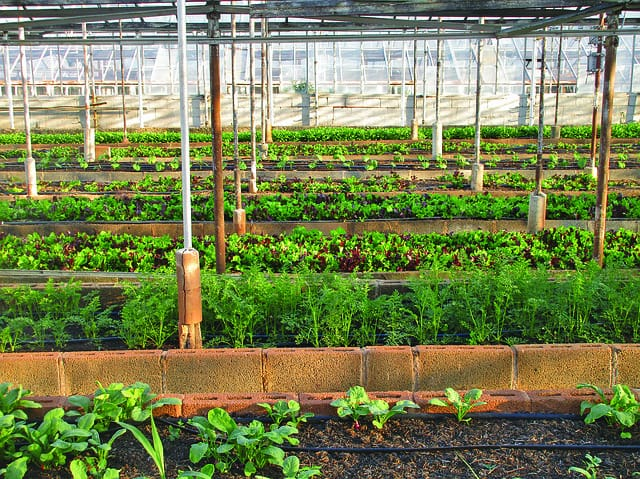 greenhouse-agriculture-farm-urban-agriculture