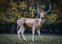 30+ Incredible Facts About the Deer
