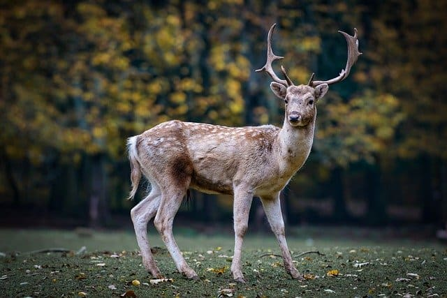 30 Incredible Facts About The Deer
