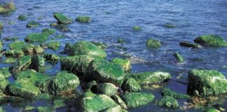 algae-on-banks-of-river