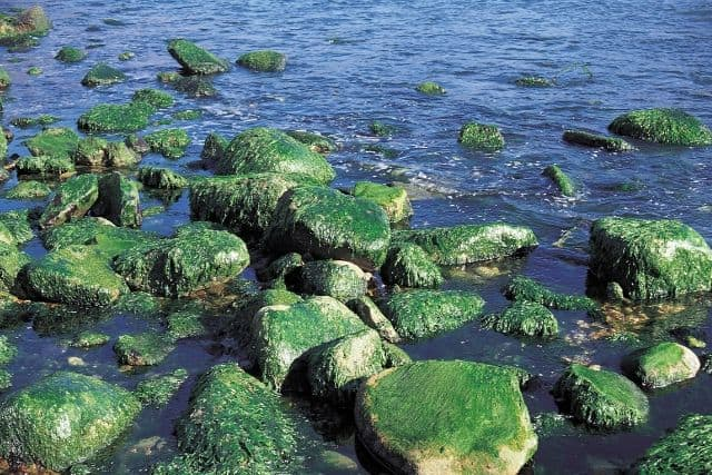 algae-on-banks-of-river