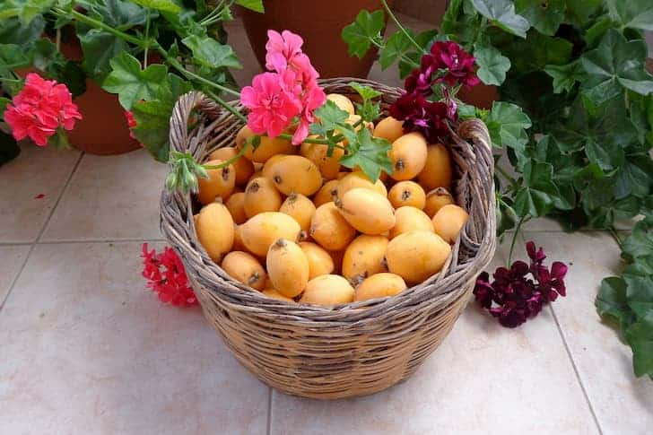 fruits-loquat-flowers-basket