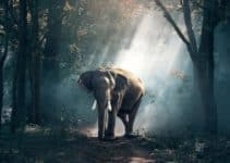 Elephants: Where Do They Live, Why are They Endangered, Various Threats and How To Save Them From Extinction