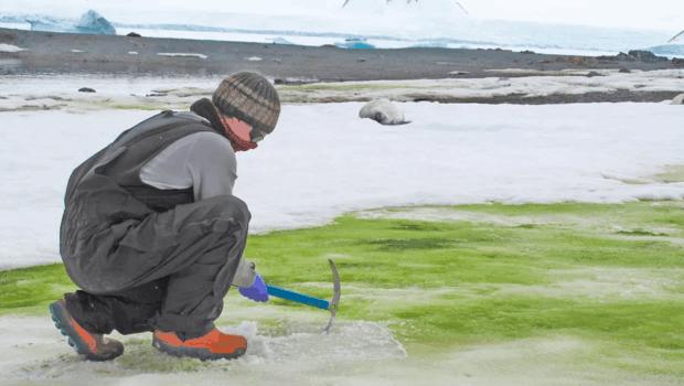 Green-snow-antartica