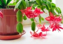 15 Extraordinary Houseplants That Can Survive the Harsh Winter Cold
