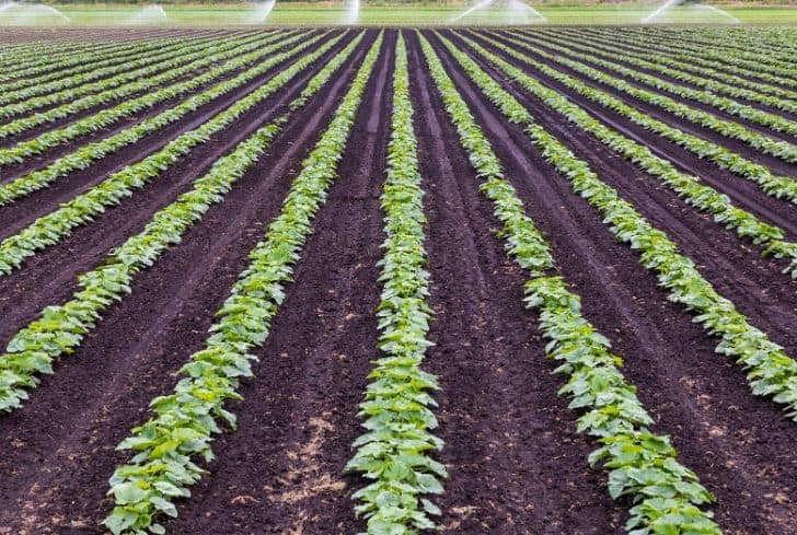Commercial Farming Characteristics Advantages Types And Examples Conserve Energy Future