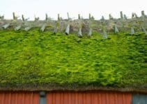 Green Roof: How Does it Work, Types, Benefits and Examples