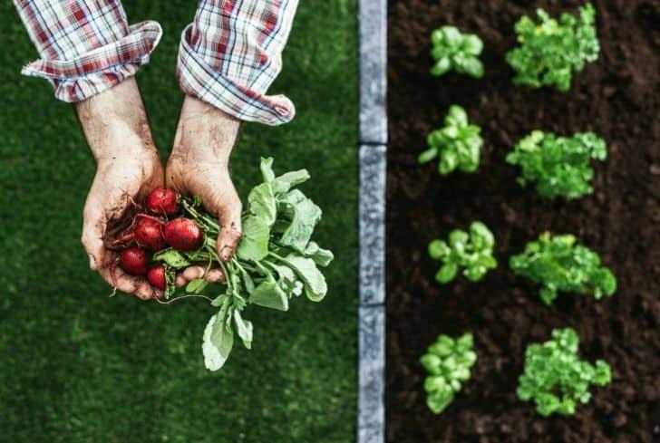 grow-crop-fruits-farming