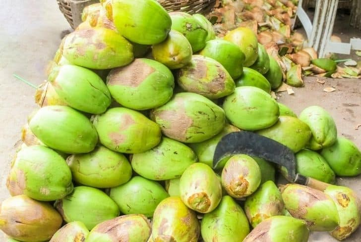 Macapuno Coconut