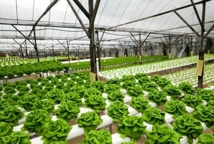 greenhouse-organic-farming-hydroponics