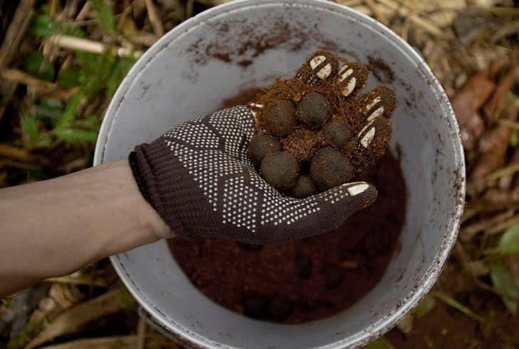 making-seed-balls