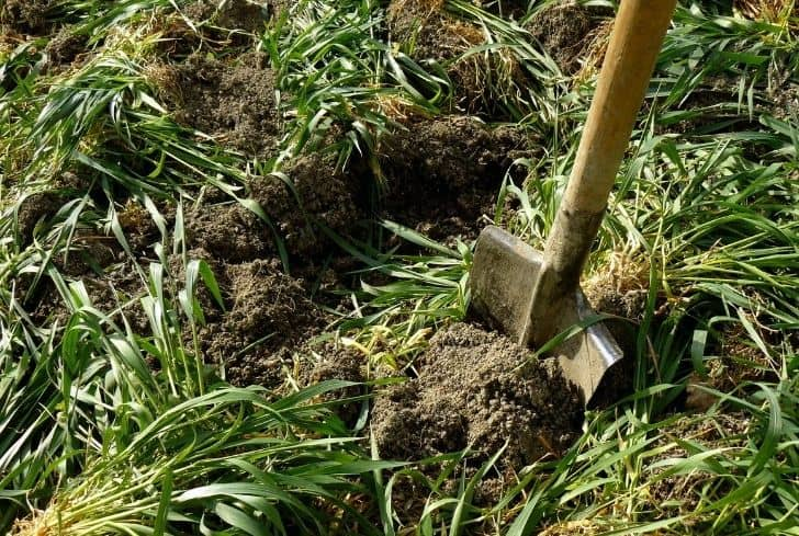 mixing-manure-soil-fertilizer
