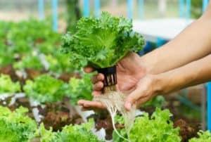 small-plant-hydroponics