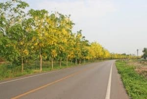 trees-on-road-reduce-pollution