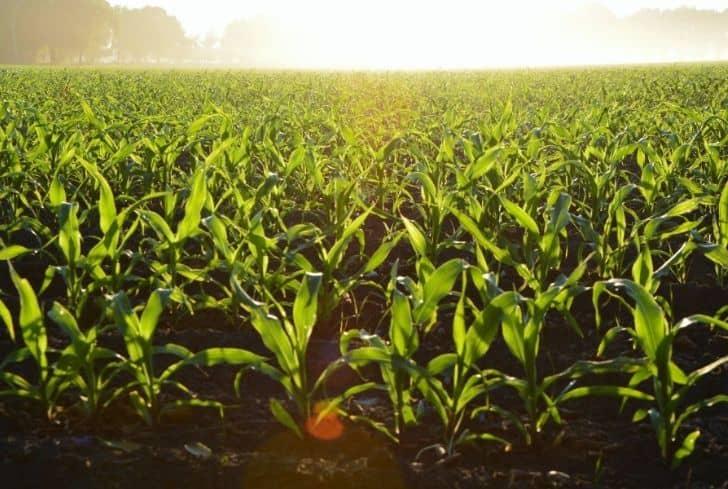 farm-field-farming