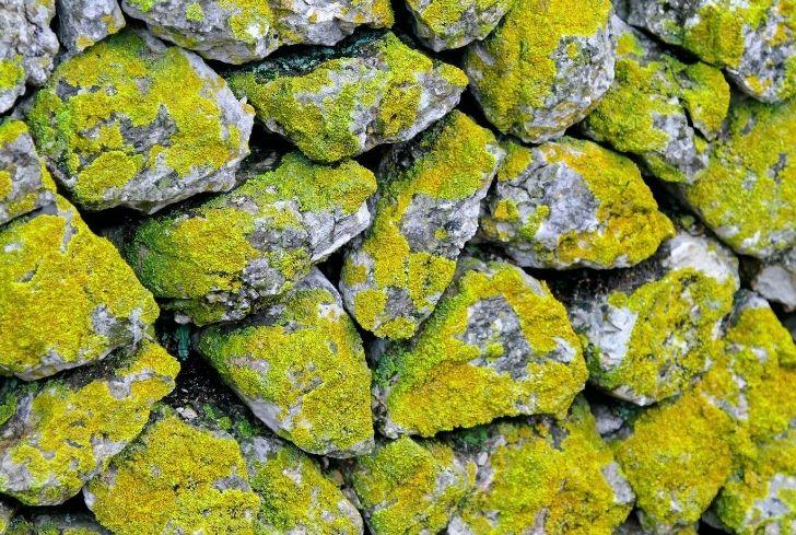 photo-moss-wall