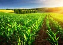 Biointensive Farming: Importance, Examples and Principles