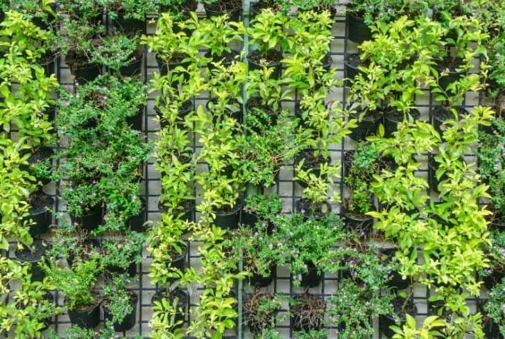photo-vertical-gardening