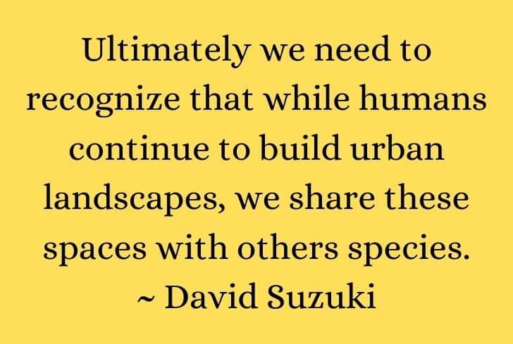 urbanization-quote-4