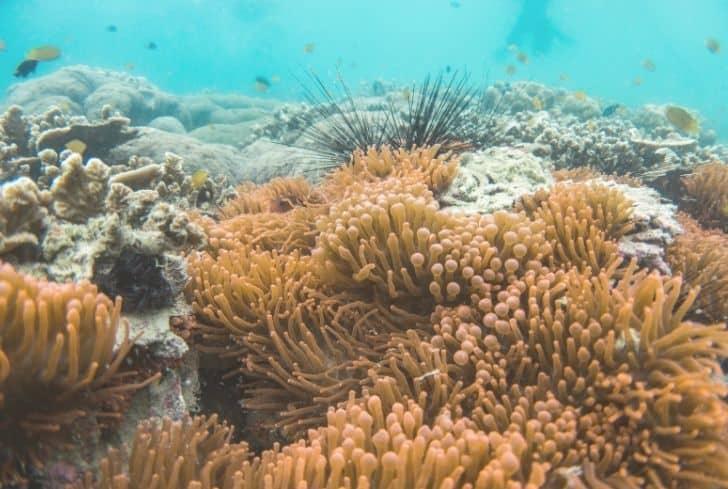 Lord Howe Island Reef