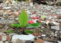 Effect of Pollution on Plants (And Do They Help Fight Pollution?)