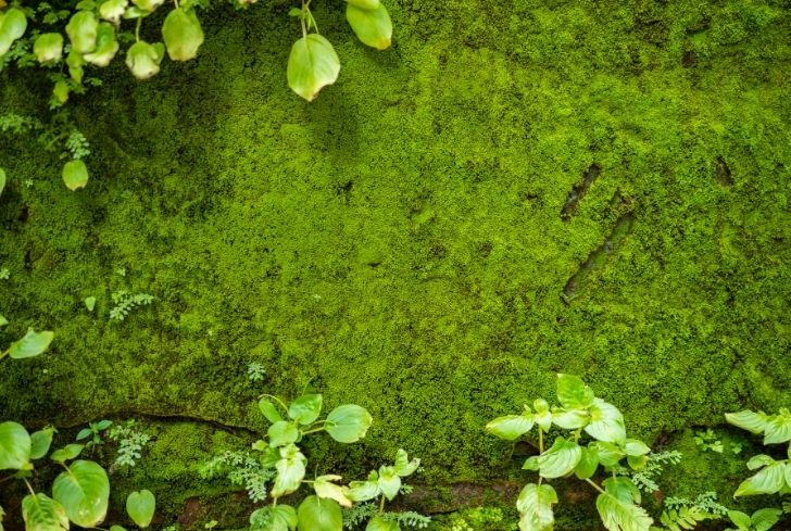 moss-on-background