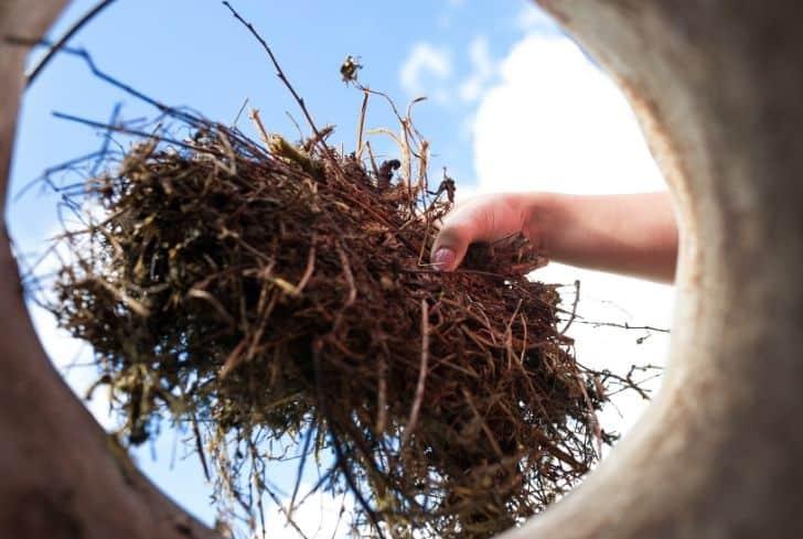 composting-organic-things
