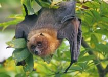 Why Are Bats Protected by the Endangered Species Act?