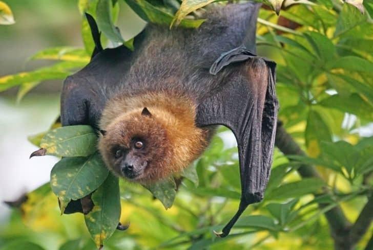 bat-in-rainforest