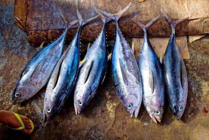 fresh-tuna-fish