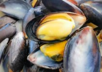 Can You Compost Mussel Shells? (And Are They Biodegradable?)