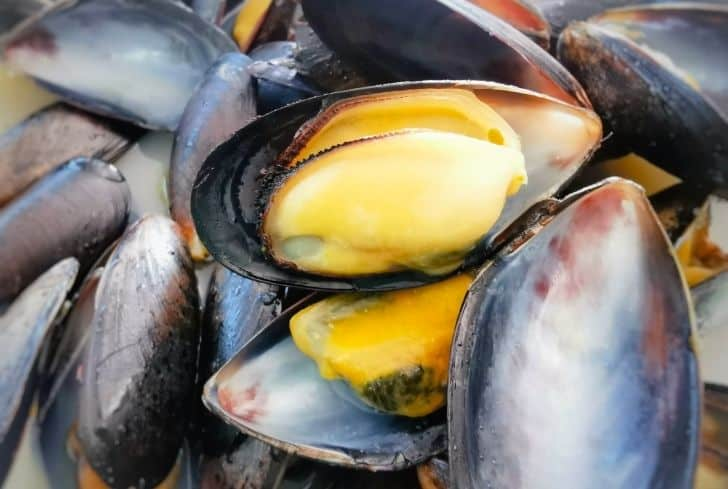 Mussel-Shells