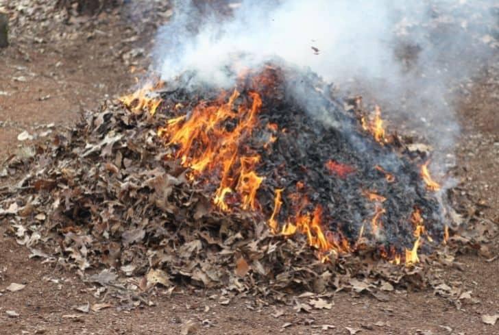 burning-dead-leaves