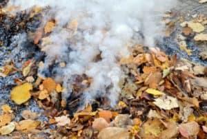 burning-leaves