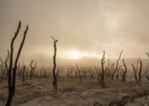 Causes, Effects and Solutions to Drought