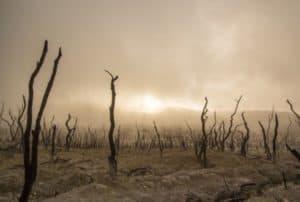 dead-trees-in-desert-drought