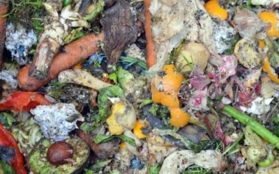 10+ Amazing Ways to Get Rid of Fruit Flies in the Compost